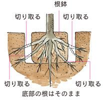 Nemawashi.jpg